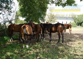 La Champenotte - Centre d'élevage