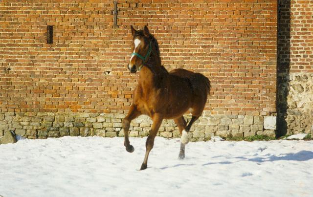 Cheval Tartenpion